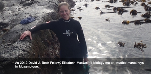 2012 Beck Fellow Elisabeth Maxwell, biology major pictured in wetsuit She studied manta rays in Mozambique