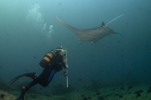Elisabeth Maxwell diving with manta ray