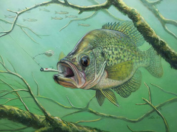 2013 Texas Freshwater Stamp