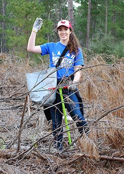 longleaf pine project