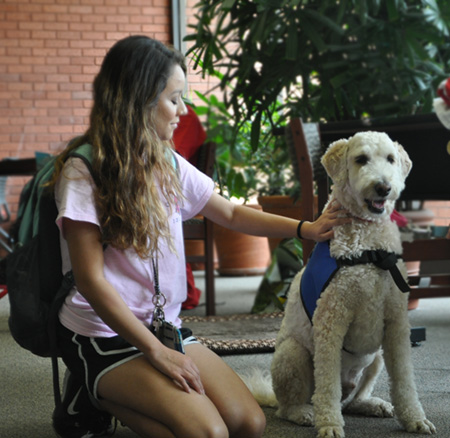 Therapy dogs allow students to 'paws' for finals