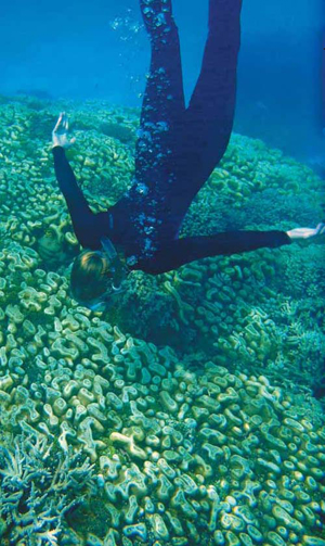 Joanie Kleypas dives to inspect coral