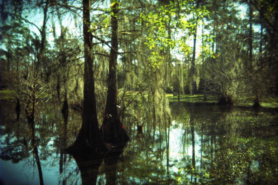 Bayou Obscured by Jason Miller